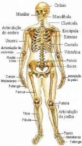 Manuel Silva Sousa (Dr.) - Ortopedia